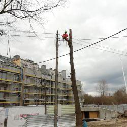wycinka drzew przy linia energetycznych we Wrocławiu