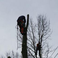 wycinka drzew rosnących przy liniach energetycznych