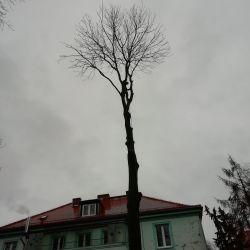 Wycinka drzewa przy chojnowskim przedszkolu