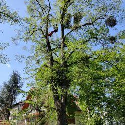 Nie Ma Lipy pielęgnuje park Marii Dąbrowskiej