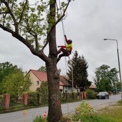 Nie Ma Lipy usuwa drzewo w pasie drogowym Stabłowice