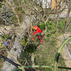 Pielęgnacja drzew na placu zabaw Kowale