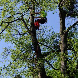Pielęgnacja drzew - park Marii Dąbrowskiej Wrocław