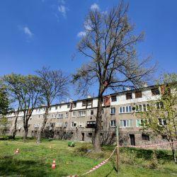 pielęgnowanie drzew rosnących w dzielnicy wrocław różanka
