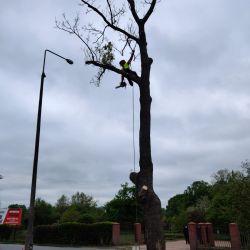 wycinka drzew w pasie drogowym Stabłowice