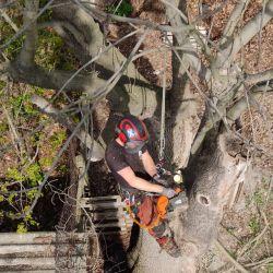 wycinanie martwych drzew na parafii