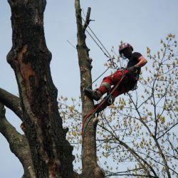 wycinka martwych drzew na parafii Książe Małe
