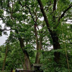 Cięcia pielęgnacyjne drzew na Biskupinie
