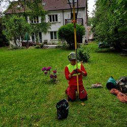 Nie Ma Lipy pielęgnuje drzewa na Biskupinie