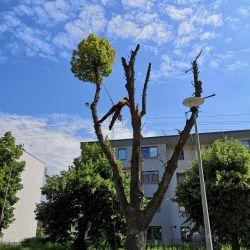 Nie Ma Lipy wycinka lipy w Leśnicy
