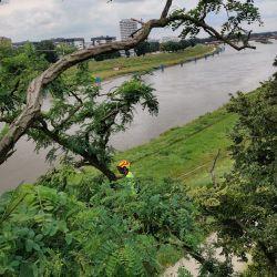 Nie Ma Lipy pielęgnuje drzewa w Parku Kasprowicza