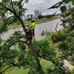 Park Kasprowicza - pielęgnacja drzew