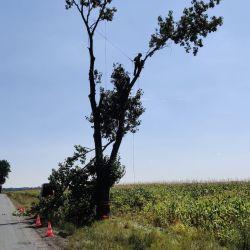 Nie Ma Lipy usuwa drzewa przy drodze