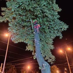 Nie Ma Lipy wycina drzewo przy trakcji