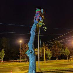 nocna wycinka drzewa przy trakcji tramwajowej