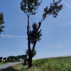 wycinka drzew przy drodze pod Wrocławiem