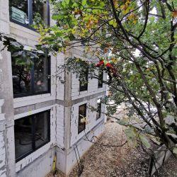 Nie Ma Lipy pielęgnuje drzewa na budowie na Karłowicach