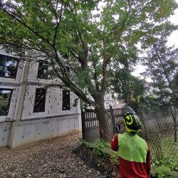 pielęgnacja-drzew-karłowice