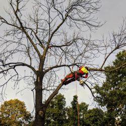 usuwanie drzew na cmentarzu Św. Wawrzyńca