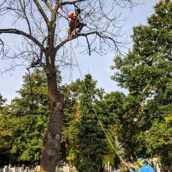 wycinanie drzew na wrocławskim cmentarzu