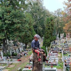wycinka drze na cmentarzu przy ul. Bujwida
