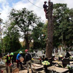 wycinka uschniętych drzew cmentarz św. Wawrzyńca