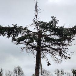 Nie Ma Lipy wycina drzewa na budowie Port Popowice