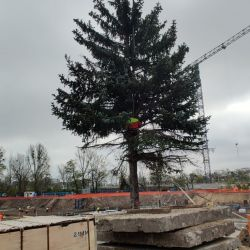 usuwanie drzewa przy pomocy żurawia