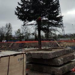 wycinanie drzew z pomocą żurawia we Wrocławiu