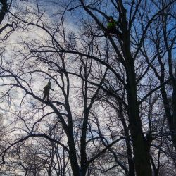 Nie Ma Lipy ściąga posusz w Parku Marii Dąbrowskiej