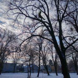 pielęgnowanie drzew w Parku Marii Dąbrowskiej we Wrocławiu