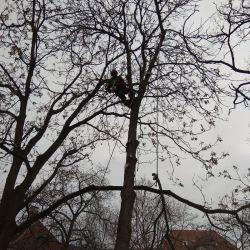 usuwanie dwóch drzew rosnących na Ostrowie Tumskim