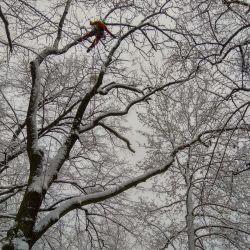 usuwanie posuszu park Marii Dąbrowskiej