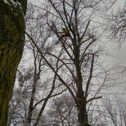 zimowa pielęgnacja drzew w Parku Marii Dąbrowskiej