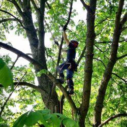 Nie Ma Lipy pielęgnuje drzewa na wrocławskim cmentarzu