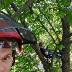 pielęgnacja drzew na cmentarzu św. Wawrzyńca