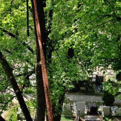 ściąganie posuszu cmentarz przy ul. Bujwida