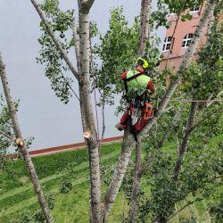 Nie Ma Lipy pielęgnuje drzewa na terenie Sądu Rejonowego we Wrocławiu
