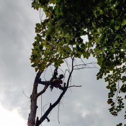pielęgnacja drzew sąd rejonowy wrocław