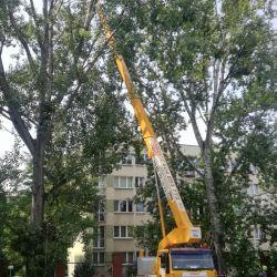 pielęgnacja drzew z podnośnika koszowego sąd rejonowy wrocław